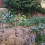 Sécheresse / jardin